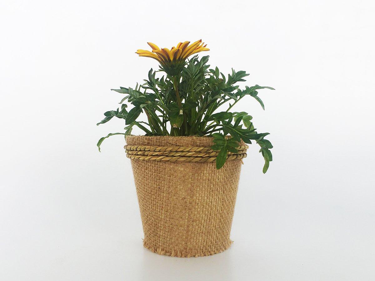 Ecologic Pot