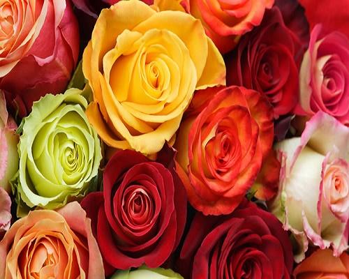 Ecuatorian Roses Decorate Cannes Festival